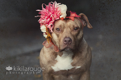 Rescue Pit with Autumn Floral Crown